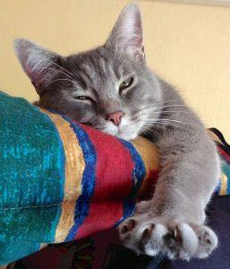 cat-319699_640